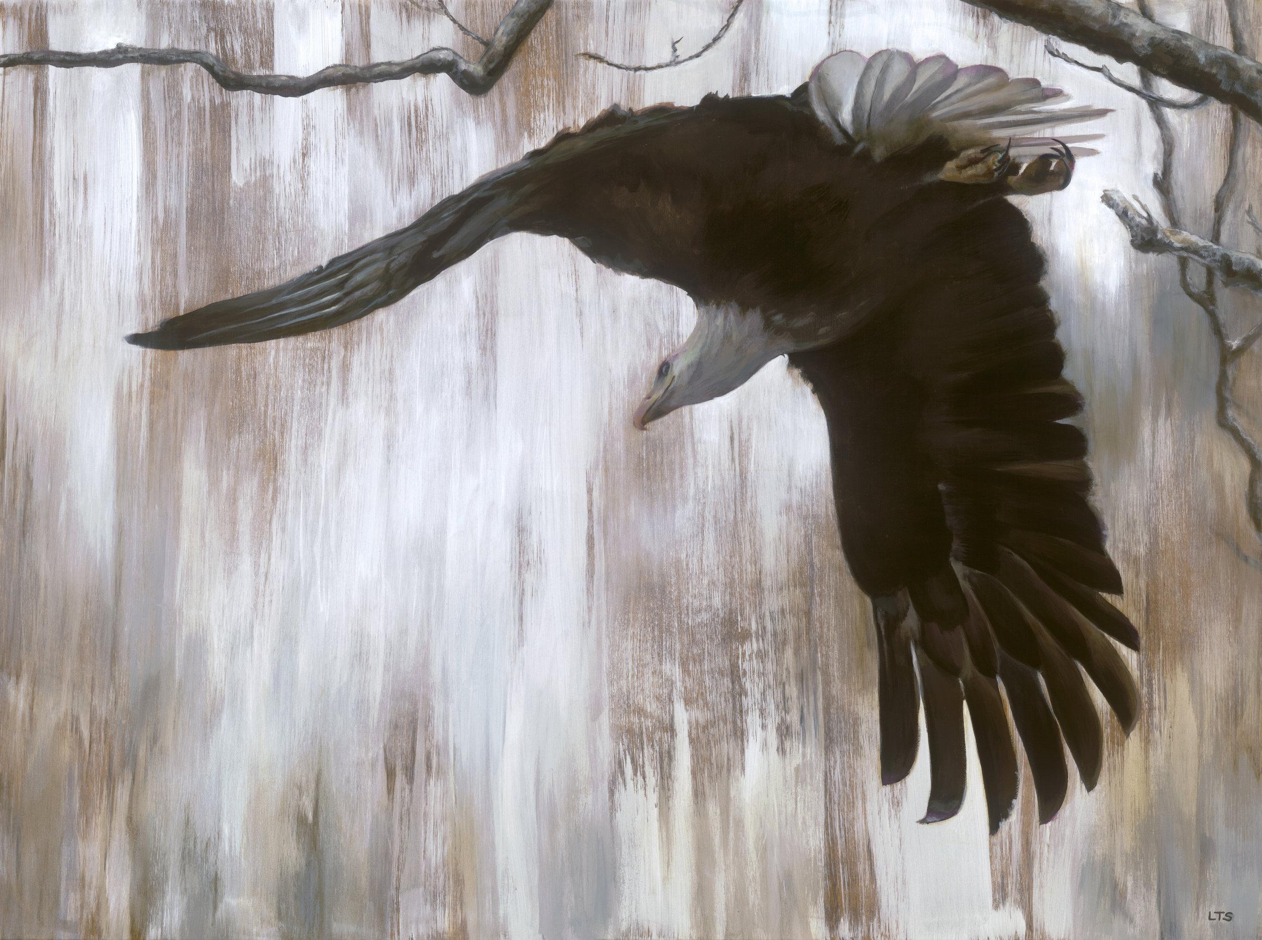 Lindsay Sandbothe - Bald Eagle.jpg