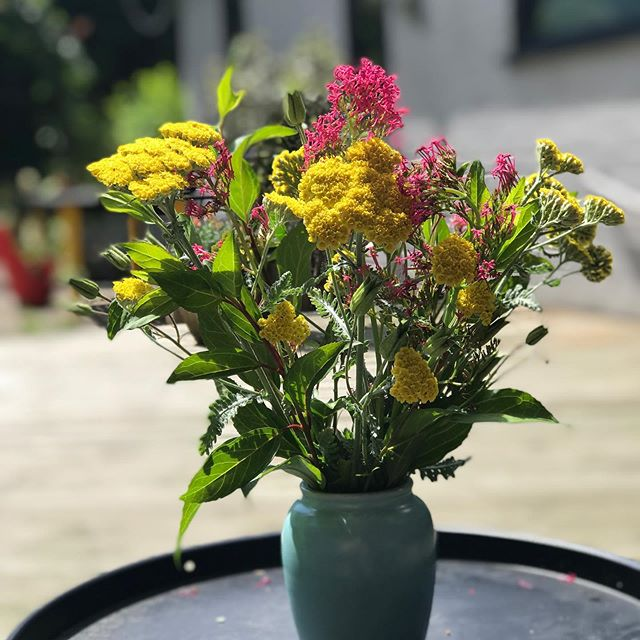 Why people pay money for cut flowers when a weekly garden tidy gives you seasonal, long lasting displays for free 🥰🌿 Aquilegia seed heads are my top tip for this week 👍 . . . . . #studiobrio #sustainableliving #cutflowers #flowerarranging #achillea #valerian #aquilegia #foliage #forsythia #flowersofinstagram #gardendesign #onashoestring #timeinthegarden #boquetofflowers #yellow #pink #carbonfootprints