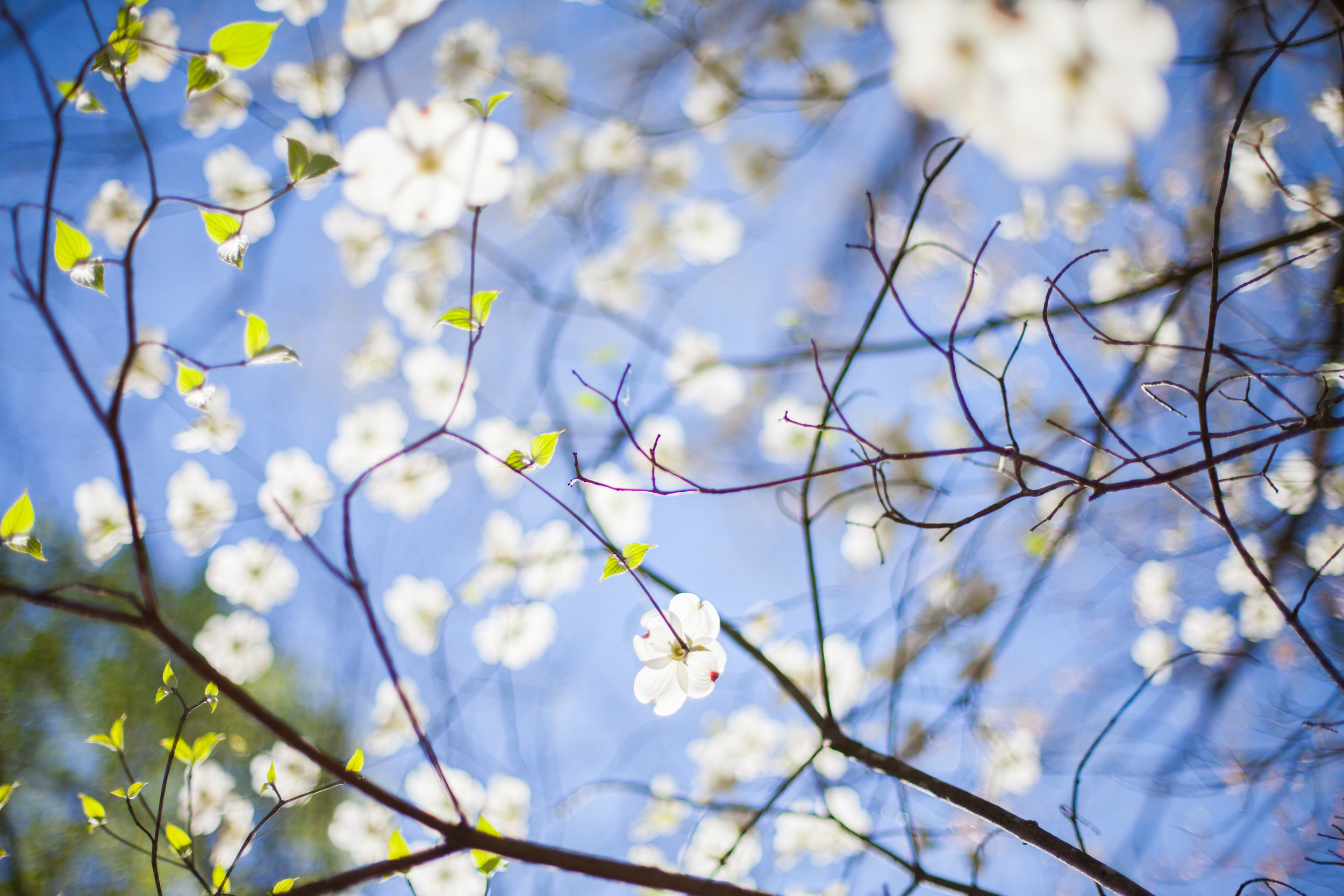 April 28, 2019 - Sermon- Doug Allison