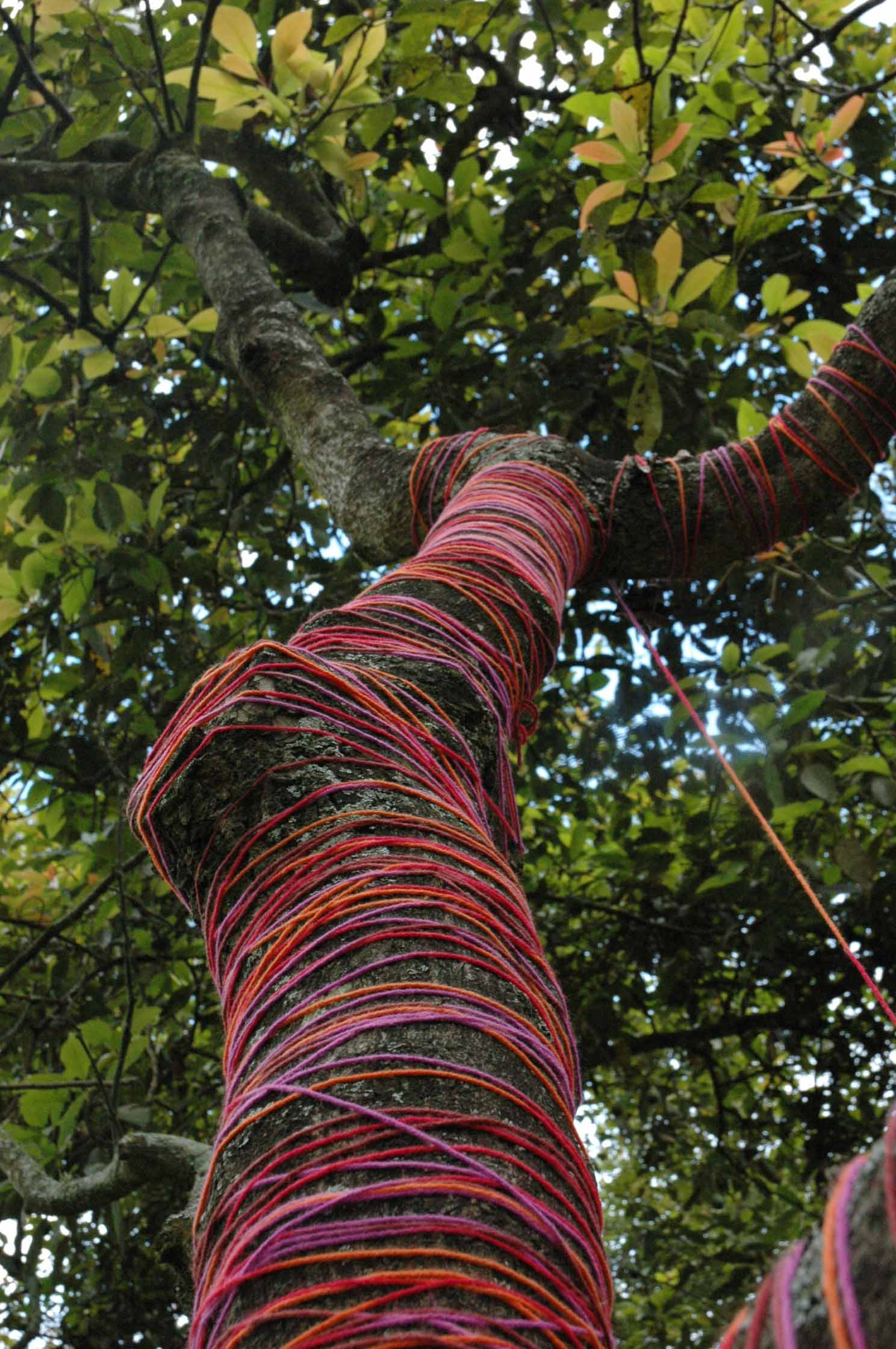 This is the first tree made in Puembo, Ecuador.