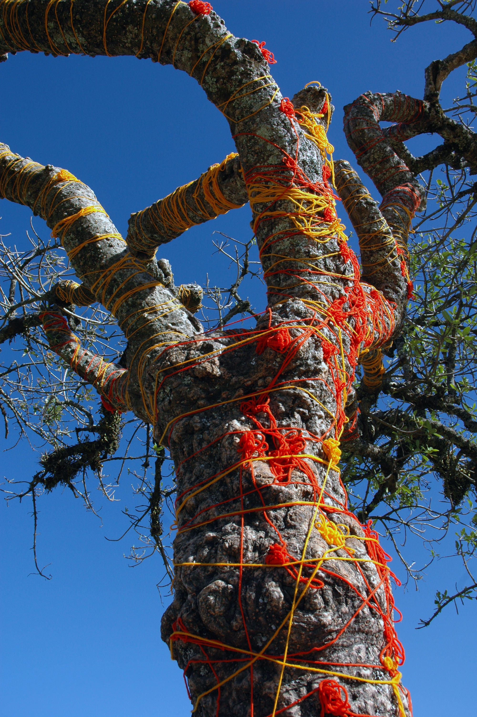 This is a close up of the sacred tree.