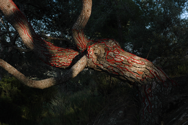 This is near Valencia, it shows the blood of the tree.