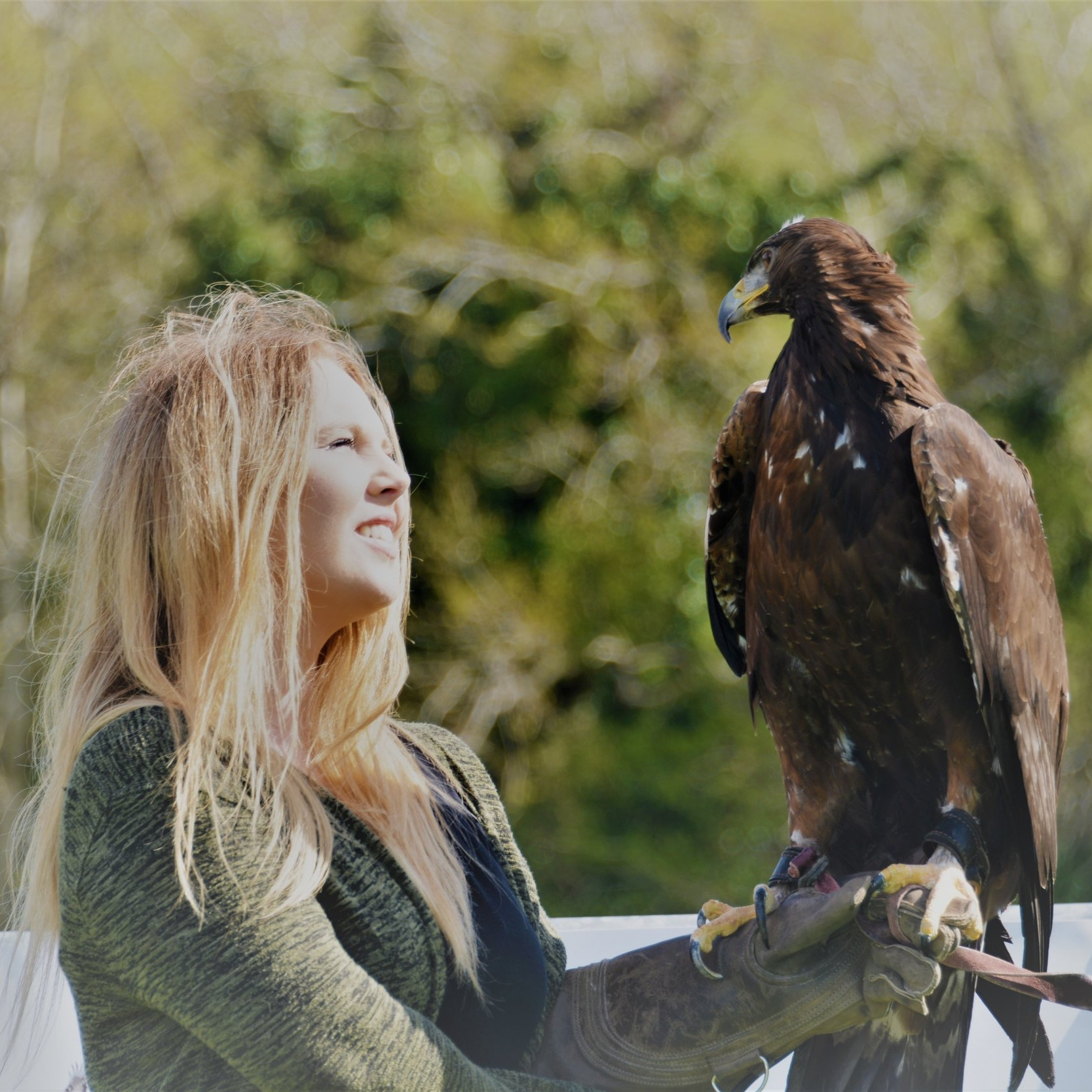 Sophie-lee Williams - Co-Director/Project researcherSophie-lee is a raptor biologist that has over 10 years experience working with wild, wild-injured and rehabilitated owls and raptors. Her ambition is to dedicate her research career to restoring welsh biodiversity and habitat.