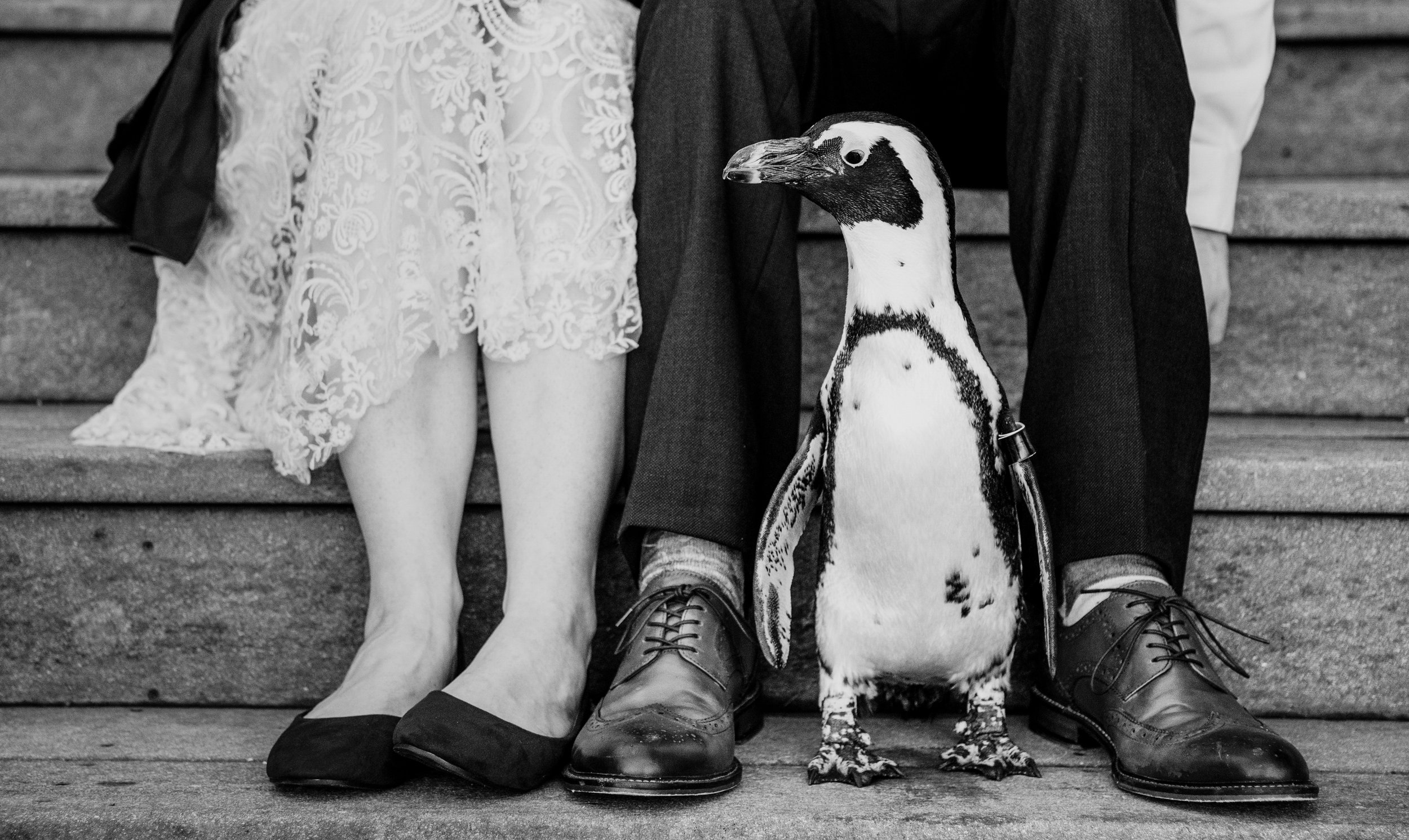zoo-wedding-penguin-black-and-white.jpg