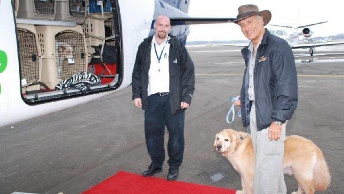 About pet airways - Pet Airways is a pet-only airline where our pawsengers fly in the main cabin of our specially equipped aircraft, under the constant supervision of our On-Board Pet Attendants.It's all about the safety, comfort and care of our pawsengers.