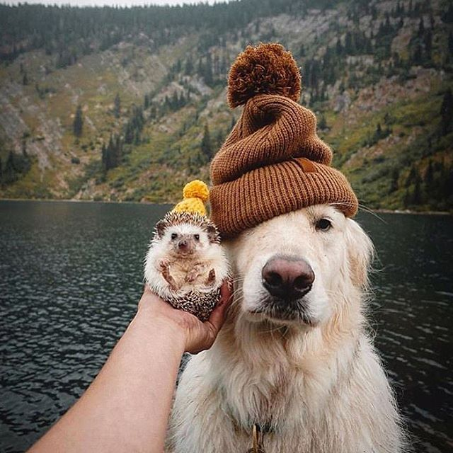 Happy #FirstDayofFall to all our furry, feathered, scaley, or pokey friends! Time to whip out the cool weather beanies and scarves. What's your favorite fall outdoor activity with your pets?