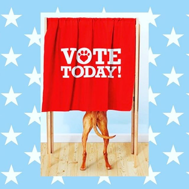 We all have the power to affect *paw*sitive change in our wonderful country. Exercise your precious right to #VoteToday!