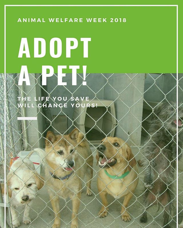 "Did you know October is also ""Adopt a Shelter Dog Month""? Another incredible way to make a difference in the lives of pets (and not just during #AnimalWelfareWeek). Do you have a personal #shelterpet adoption story? Let us know how adopting your shelter pet changed your life! #adoptashelterdogmonth #petadoption #shelterpets"