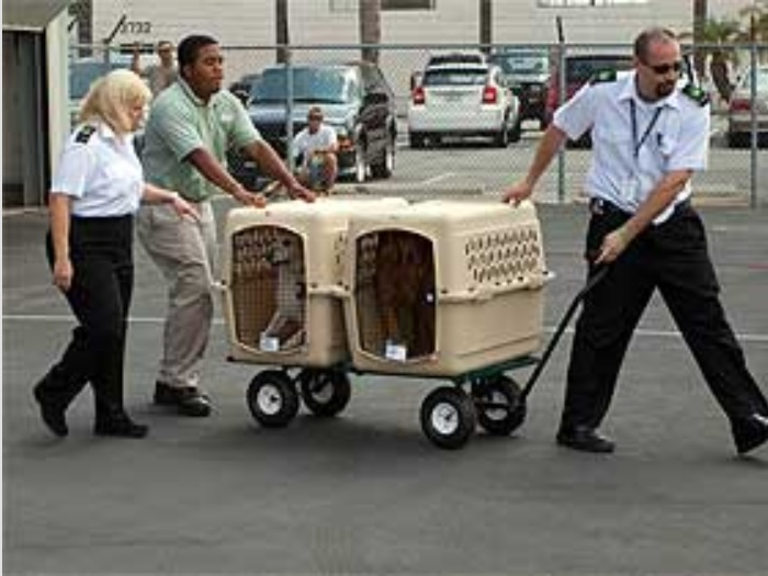 Pets are carefully escorted to their plane.