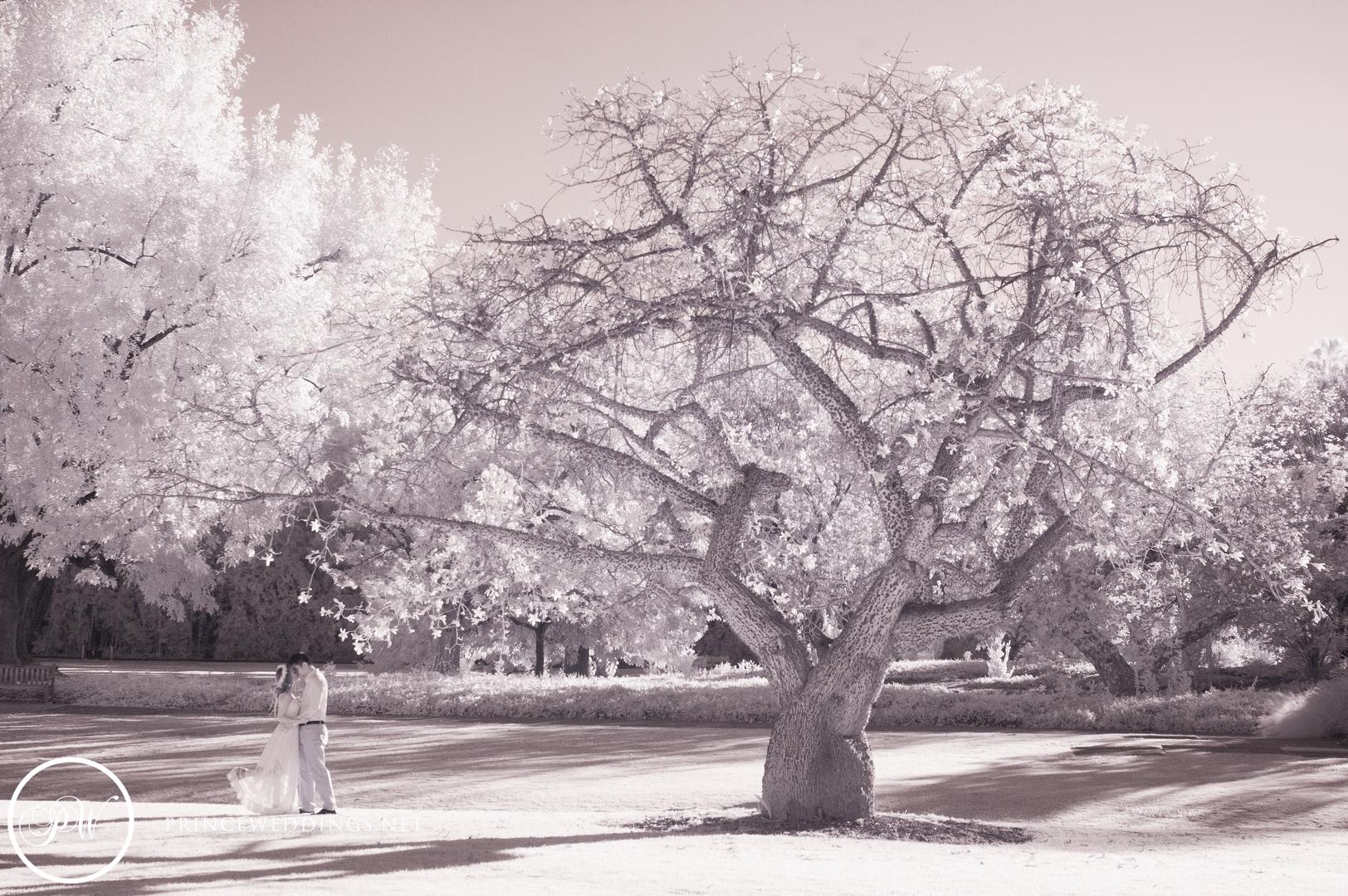 LA Arboretum Engagement Photography00024.jpg