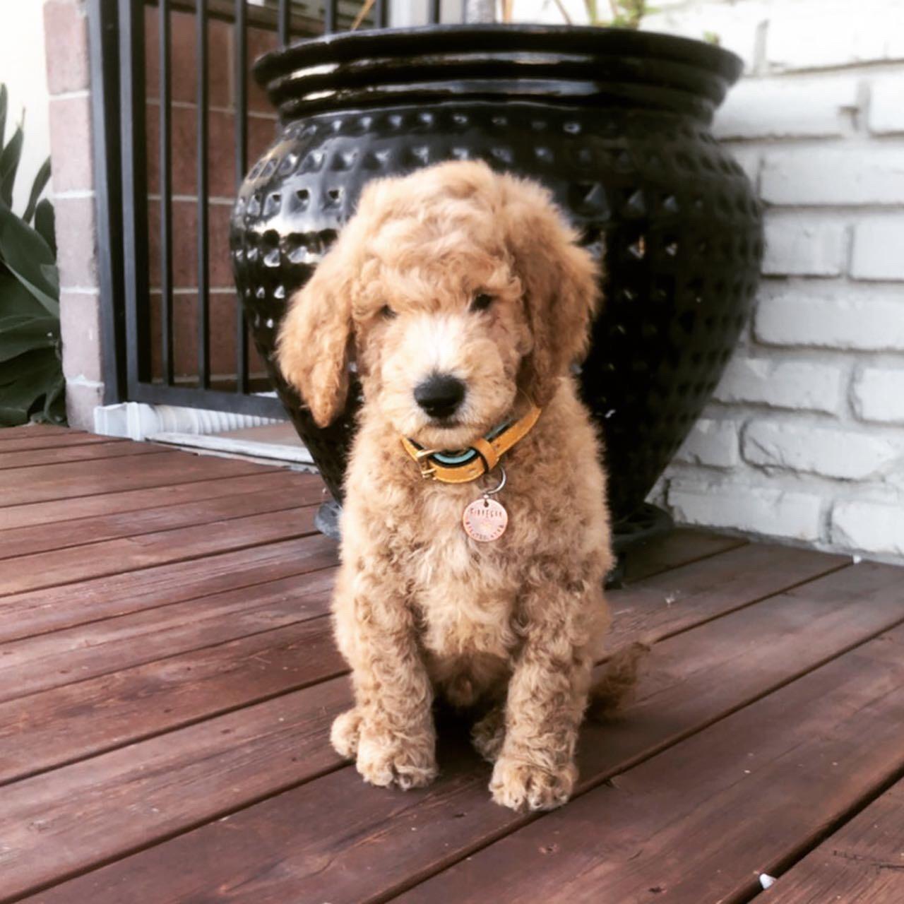 Finnegan at 8 weeks old