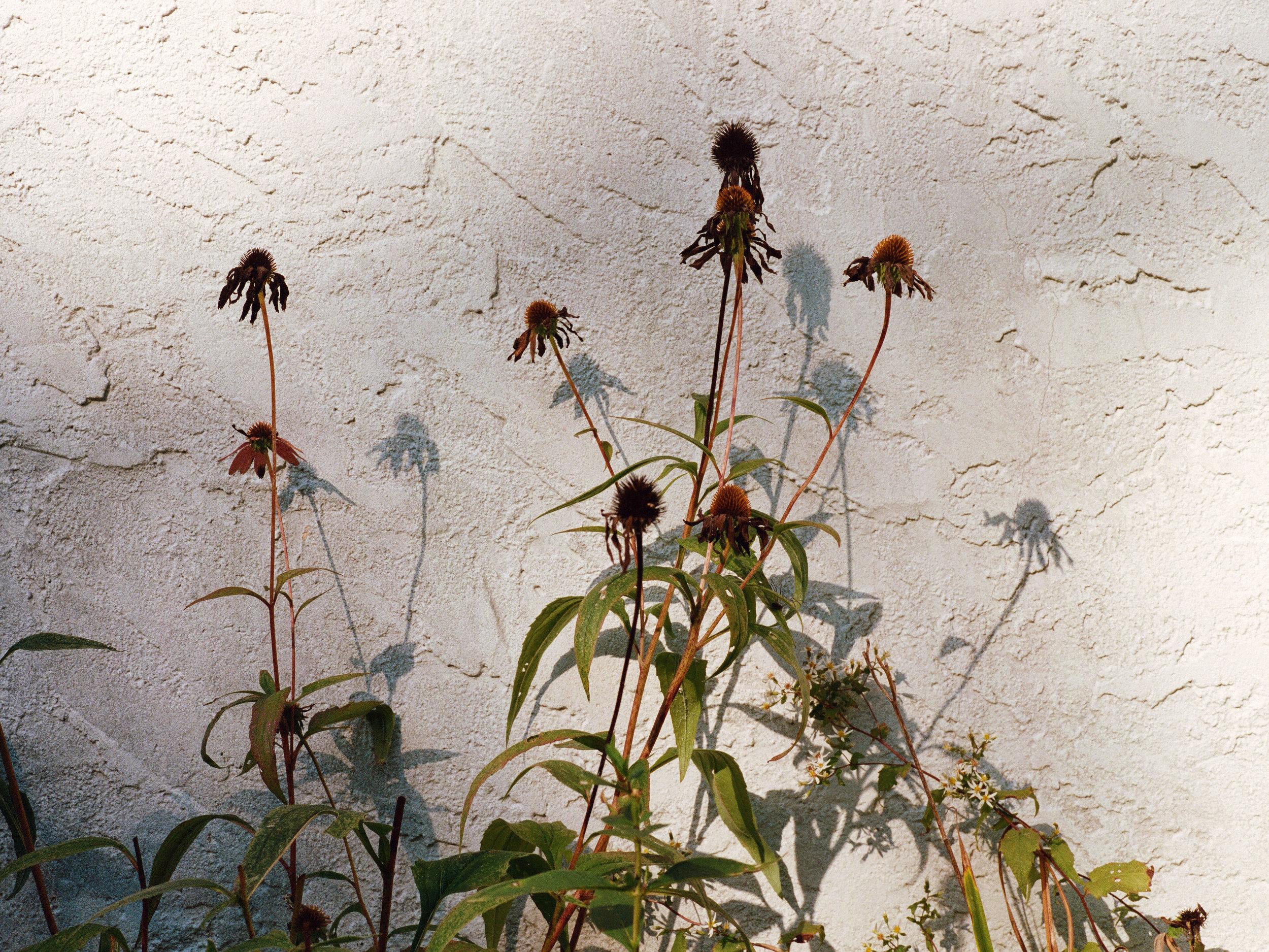 personal_richflowers.jpg