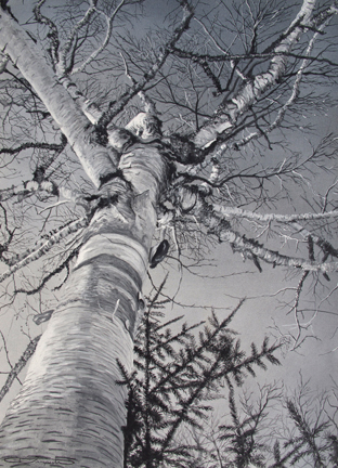 Birch Study , casein on board