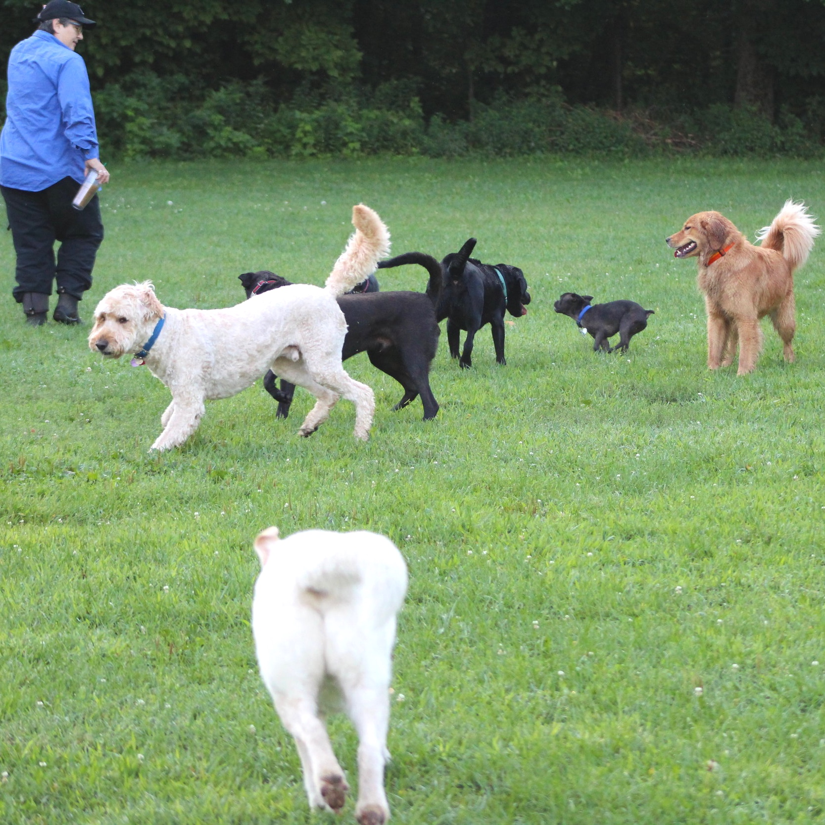 Off-Leash Skills & Play Behavior - Off-leash play in wide open areas is essential to a dog's well being. Learn how to encourage safe play, distinguish rough housing from potential aggression, and gain confidence in giving your dog freedom.
