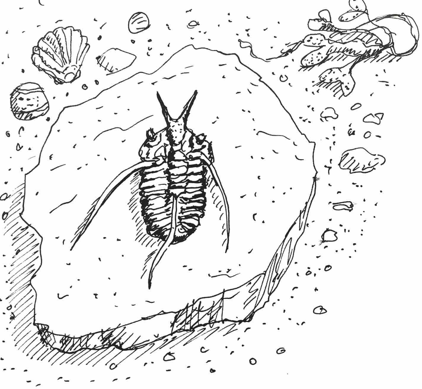 12 Trilobite.jpg
