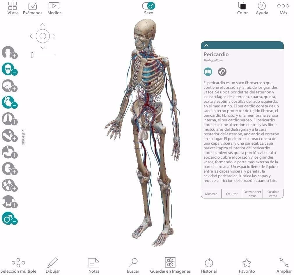 Anatomía Atlas 3D.jpg