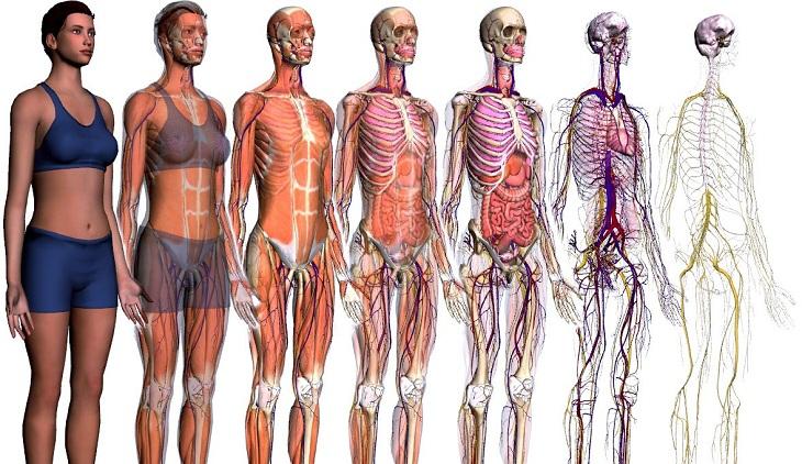 sitios-para-enseñar-la-anatomia-del-cuerpo-humano-en-3D.jpg