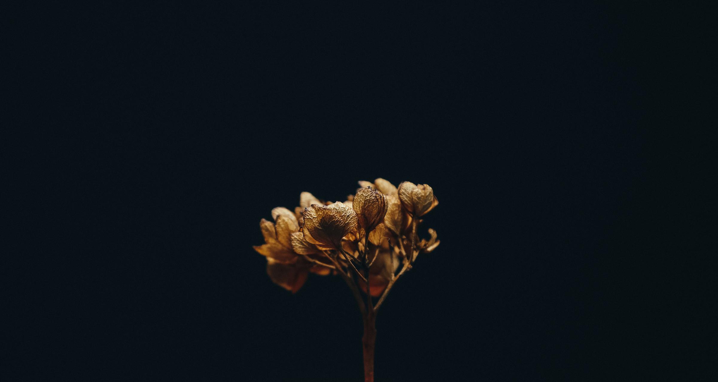 Courtesy of Yanina May Photography.