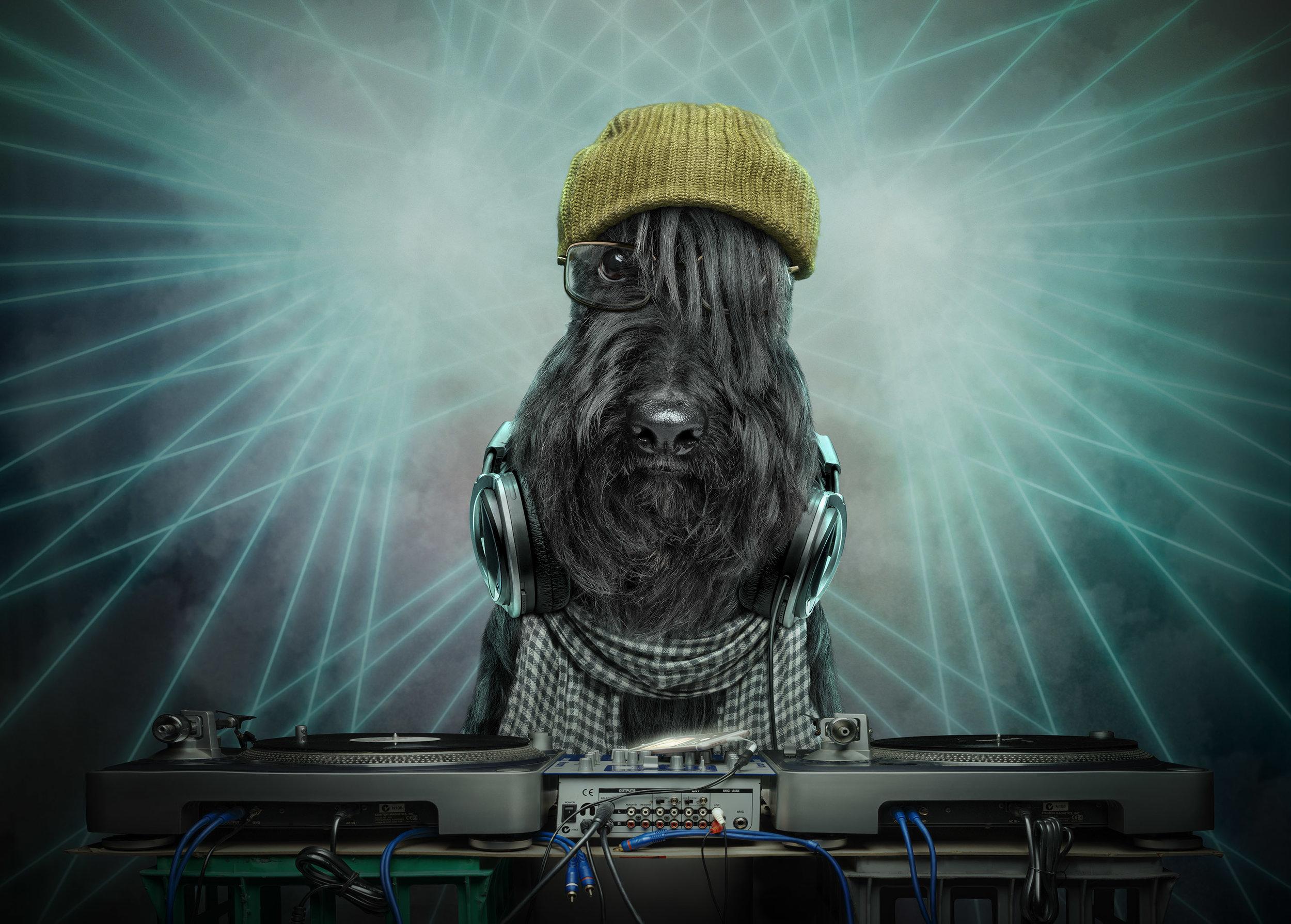 'EDM: Electronic Dog Music'