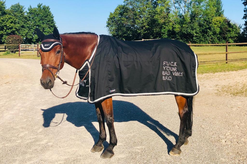 Unser bestes Pferd im Stall