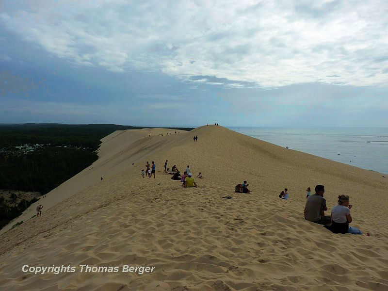 """Most of the coast of Aquitaine is sandy, with endless beaches and the famous """"Dune de Pilat"""". With a base of half a kilometer and a height of over 100m (300 ft.), it is the largest sand dune of Europe. To learn more about the vegetation of the sand dunes see Botanical Excursion to Southern France: Part 2."""