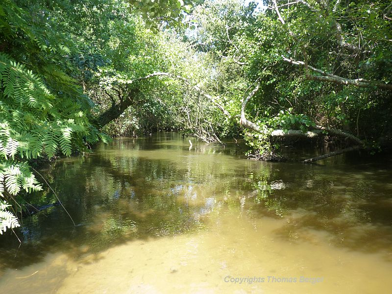Rivers and creeks are overgrown with a rich vegetation that reminds me of gallery forests found along rivers in Africa.