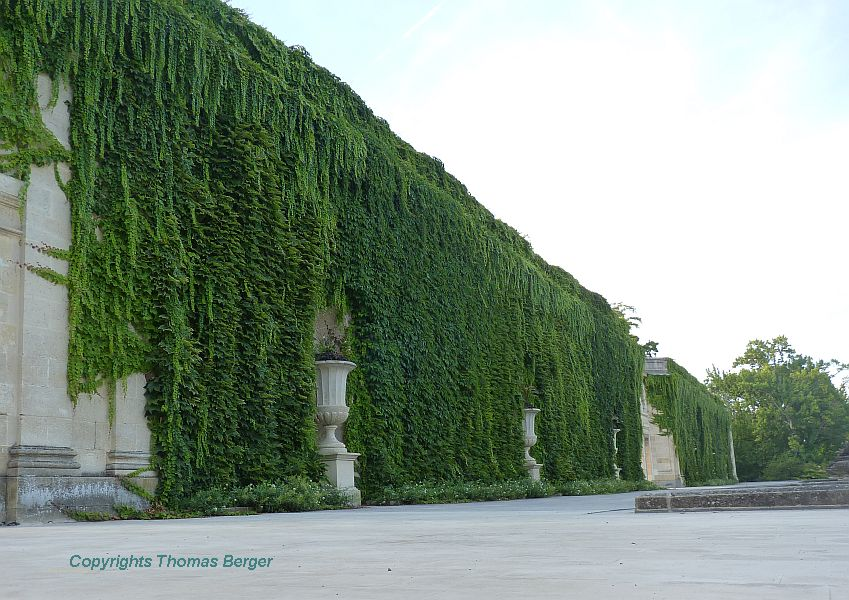 In the Jardin Publique, a number of greenhouses were once connected to a centrally located building. Today, this is the dominant architectural element of the park and reflects beautifully in a wide pond. The back side is overgrown with Boston Ivy (Parthenocissus tricuspidata).