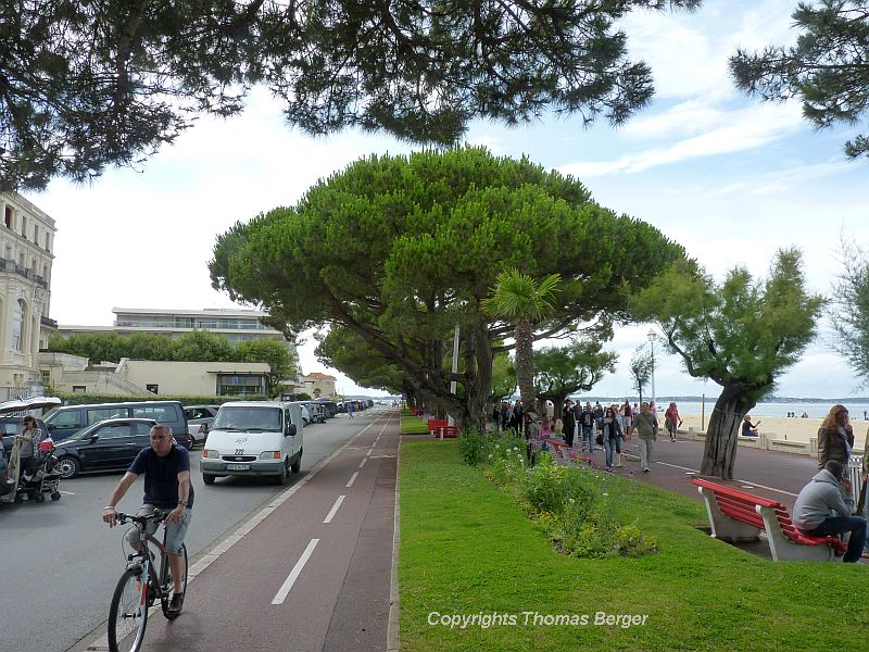 Umbrella Pines and Tamarisks are favorites in public spaces, such as here in Arcachon, a busy vacation resort on the ocean.