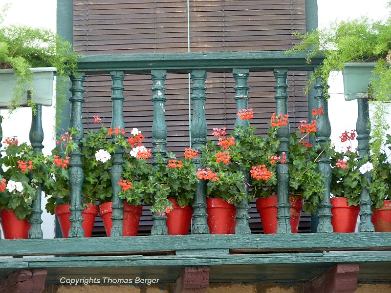 And here they are - Geraniums on the balcony!