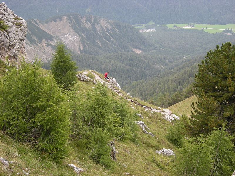 At the tree line, plants typical of the high Alps are starting to appear.