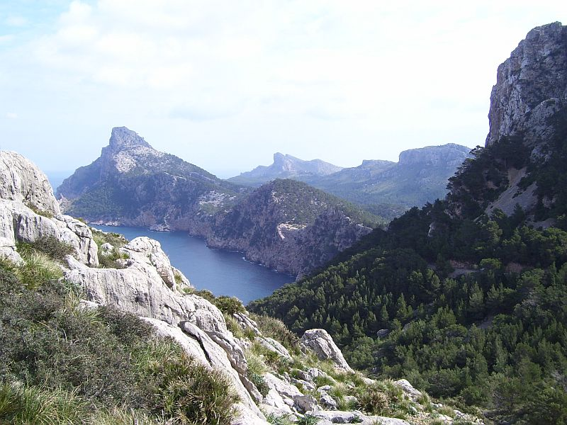 Mediterranean landscapes are often covered with forests of pine and broadleaf evergreens. The rugged landscape pictured above is typical for areas rich in limestone, where soils are thin and extremely vulnerable to erosion.