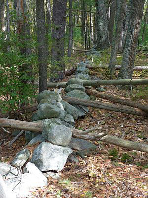 Old stone walls bear witness to a time when much of New England was farmed land. In the 1800s, many farm families left New England, tired of the shallow and rocky soils, to settle the more fertile Midwest.