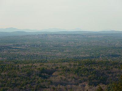 Hardwood forest P1010344-300.jpg