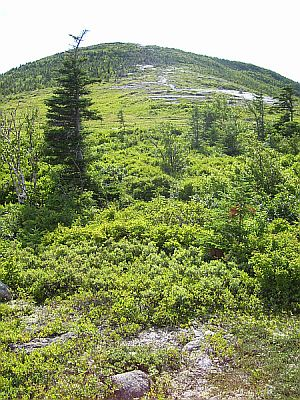 Spruce and fir dominate the mountain regions up to the tree line, where plants are stunted from the harsh conditions and form the Krummholz.