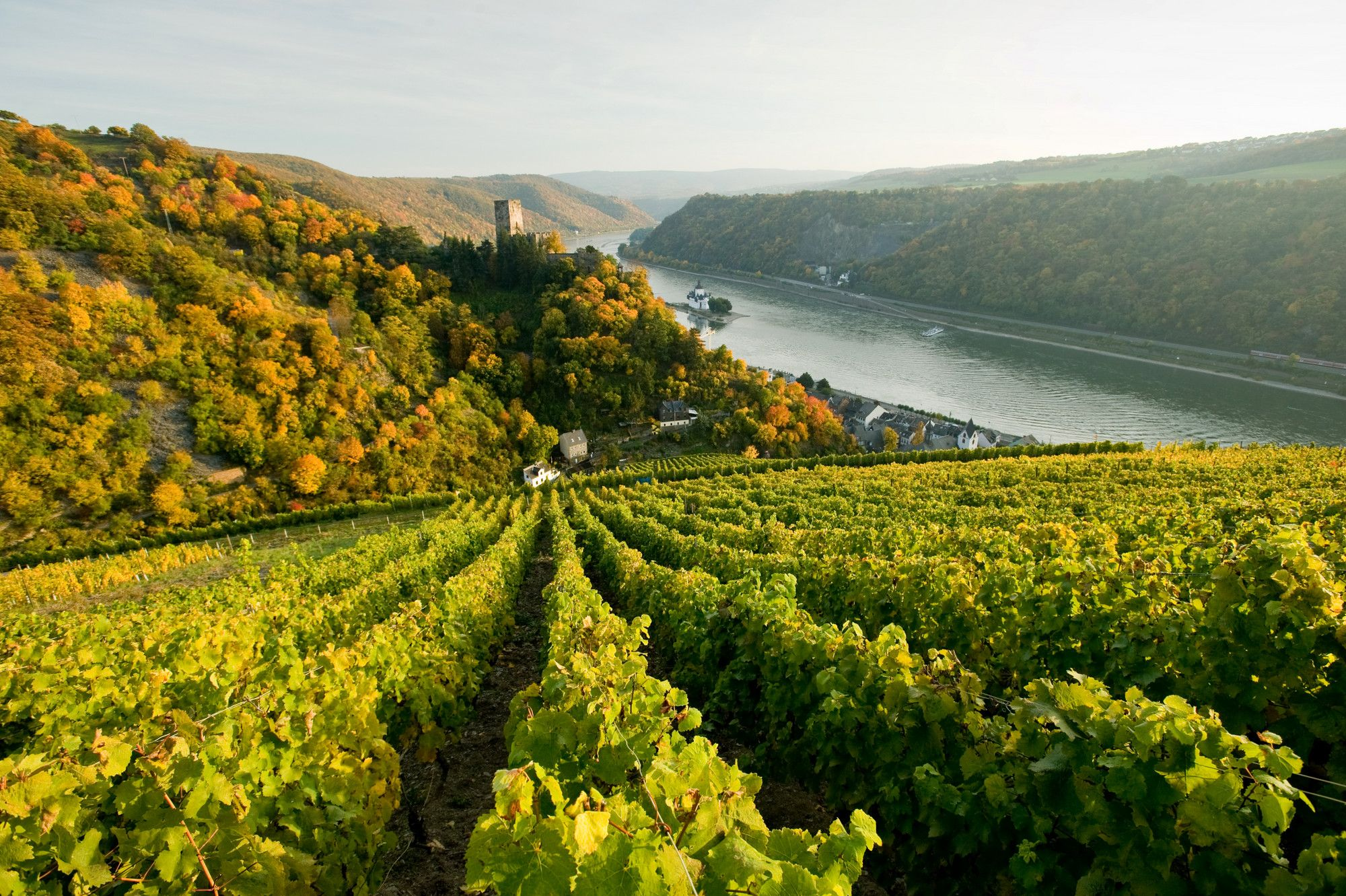The hilly vineyards along the Rhine