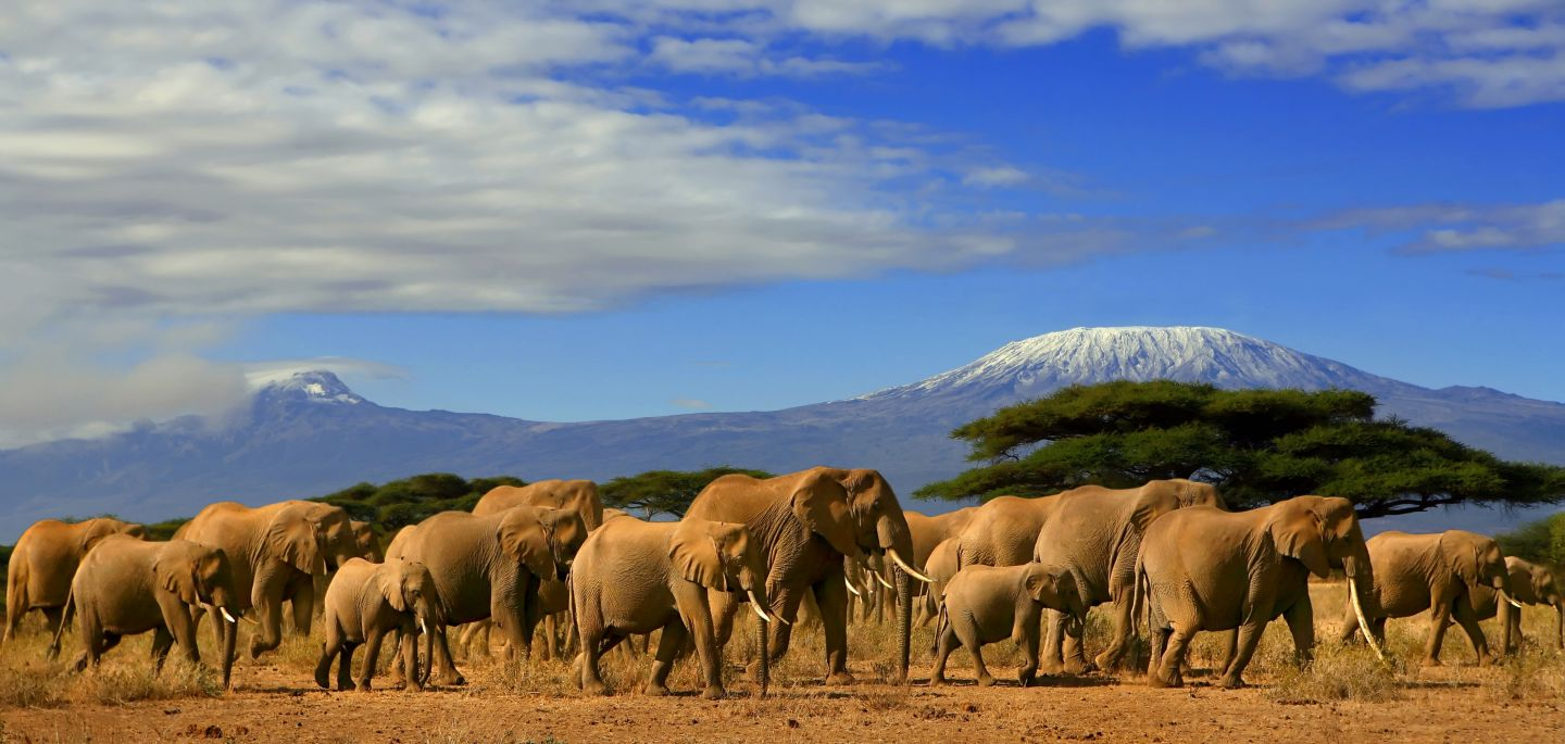 Mount Kilimanjaro in the background and a family of elephants, Amboseli National Park, Kenya