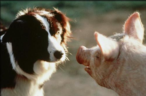 Babe talking to Fly: a mother collie that takes him in.