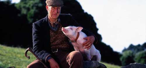 Farmer Hoggett with a hog-let.