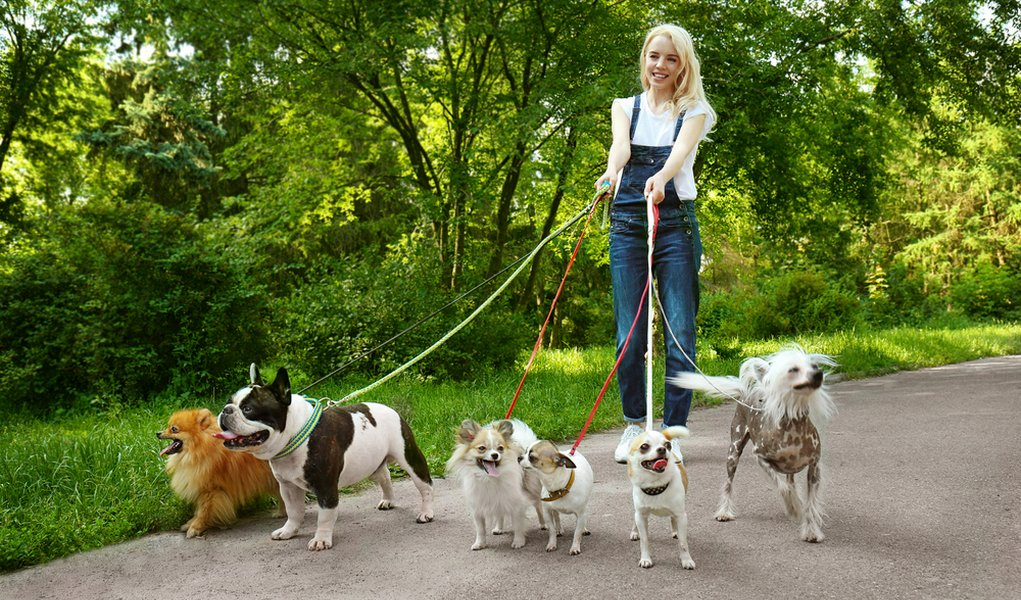 My-Top-7-Tips-on-How-to-Be-a-Successful-Dog-Walker.jpg