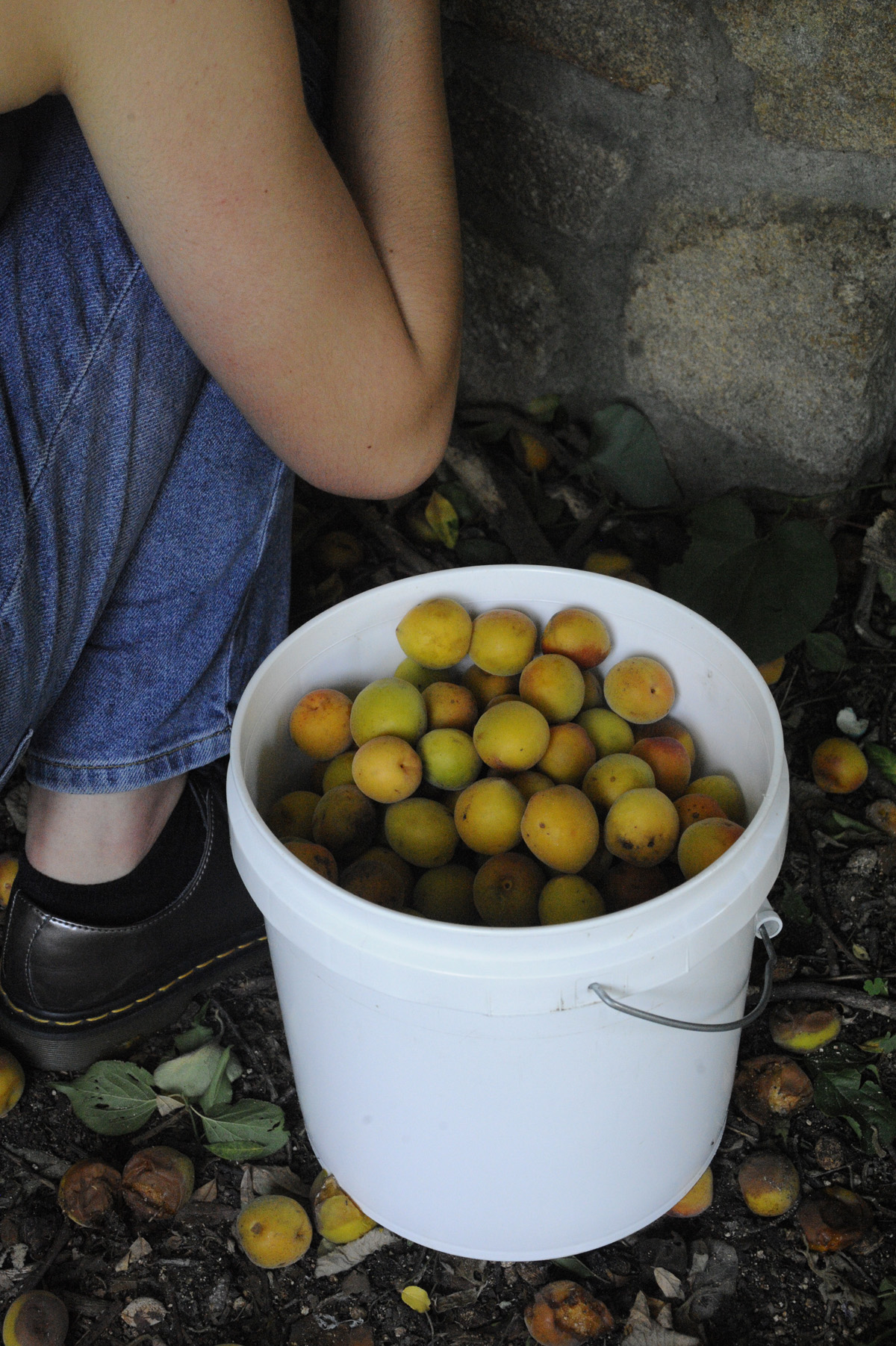 2018 June foraging for apricots RESIZE.jpg