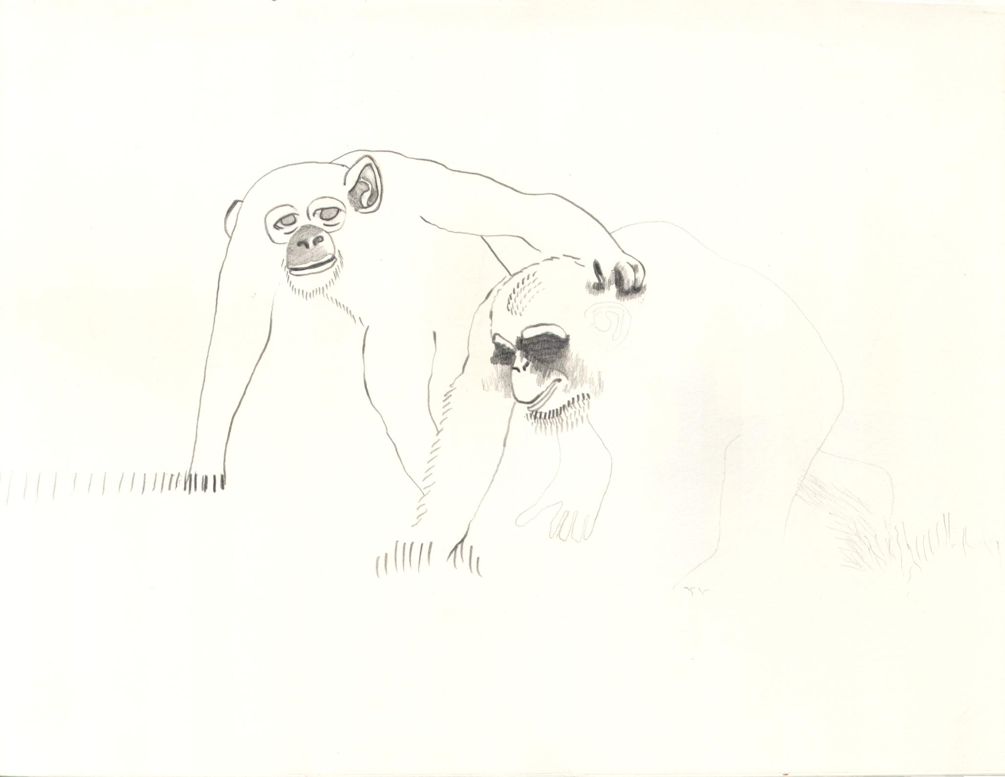 O.T. ( Affen ), 2006  Bleistift Papier, 37x47cm