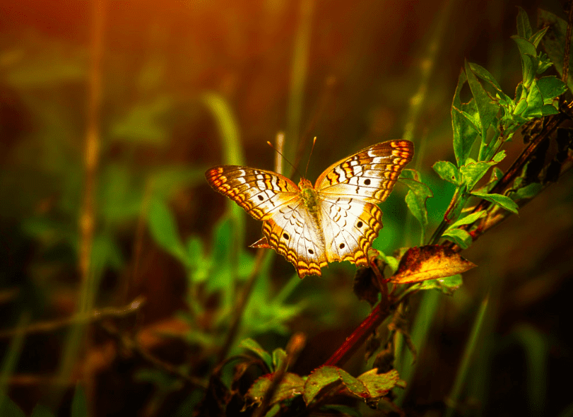 Key-west-butterfly-nature-conservatory.jpg