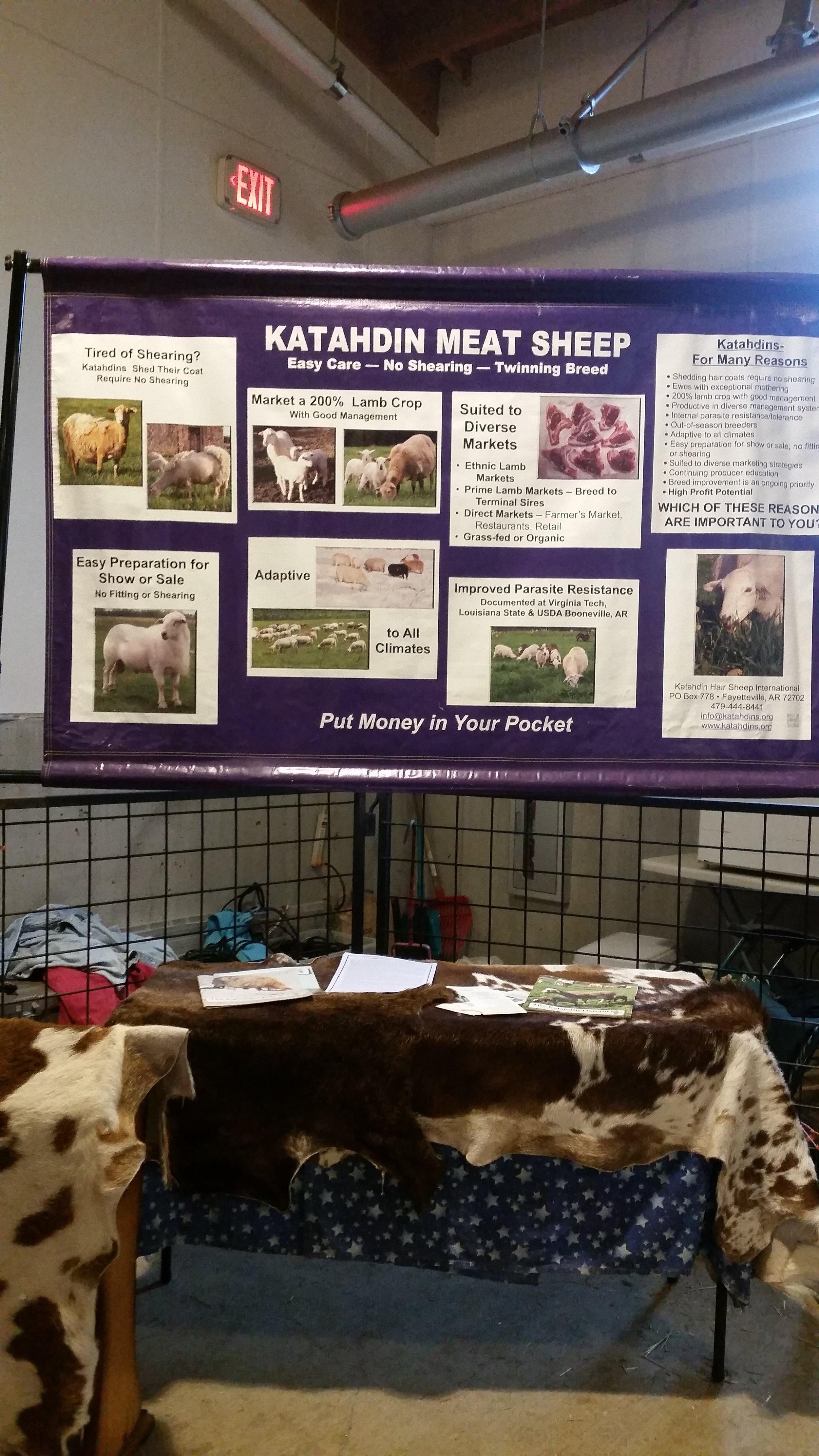 Shows and Fairs — KRK Katahdins