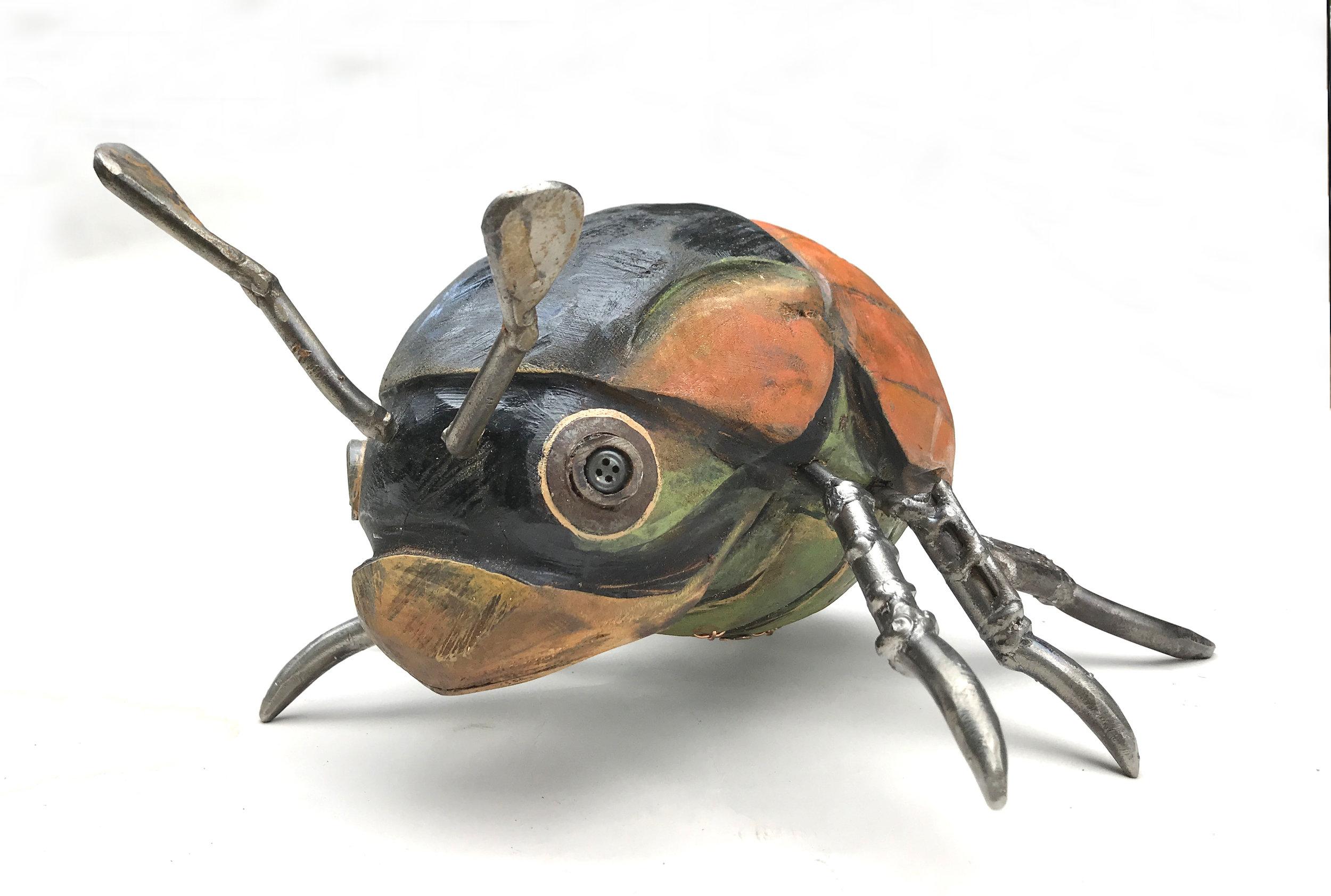helmet beetle-06.JPG