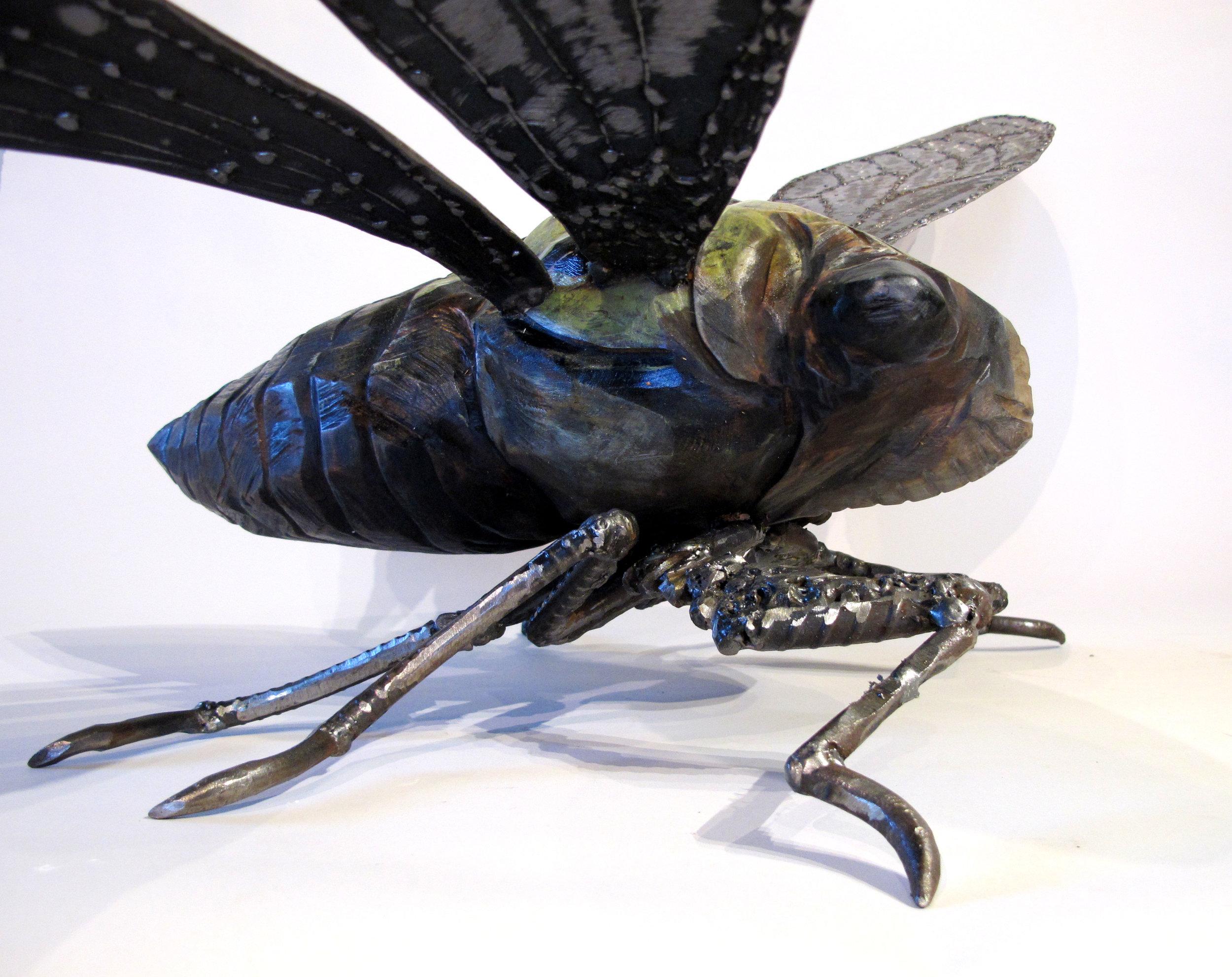 Cicada-09.jpg