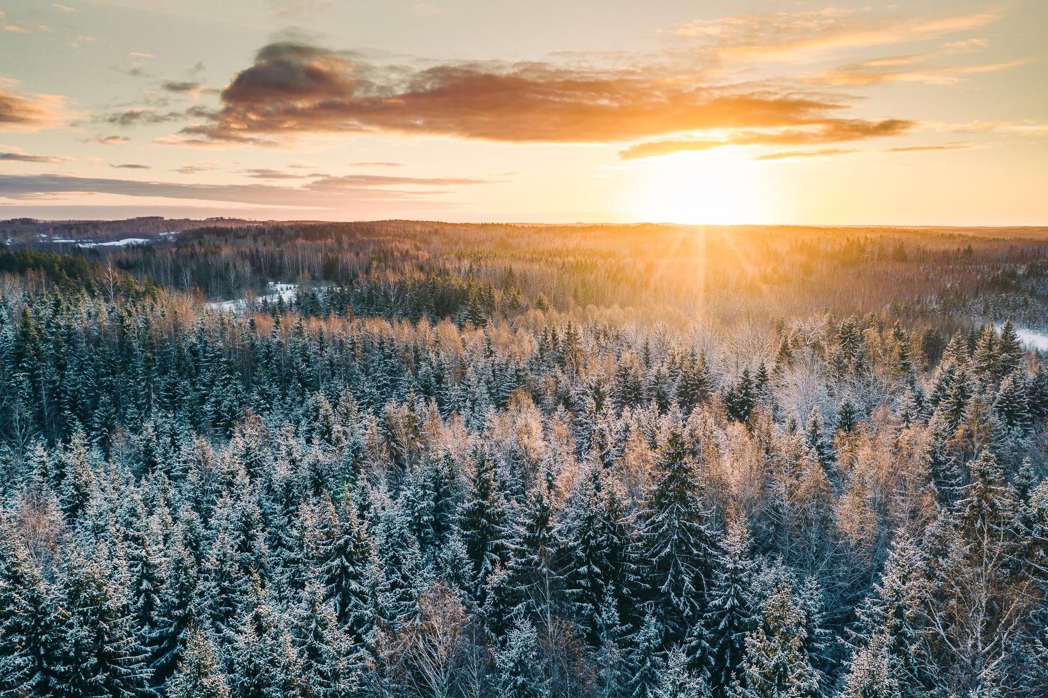 WINTER - IN LATVIA