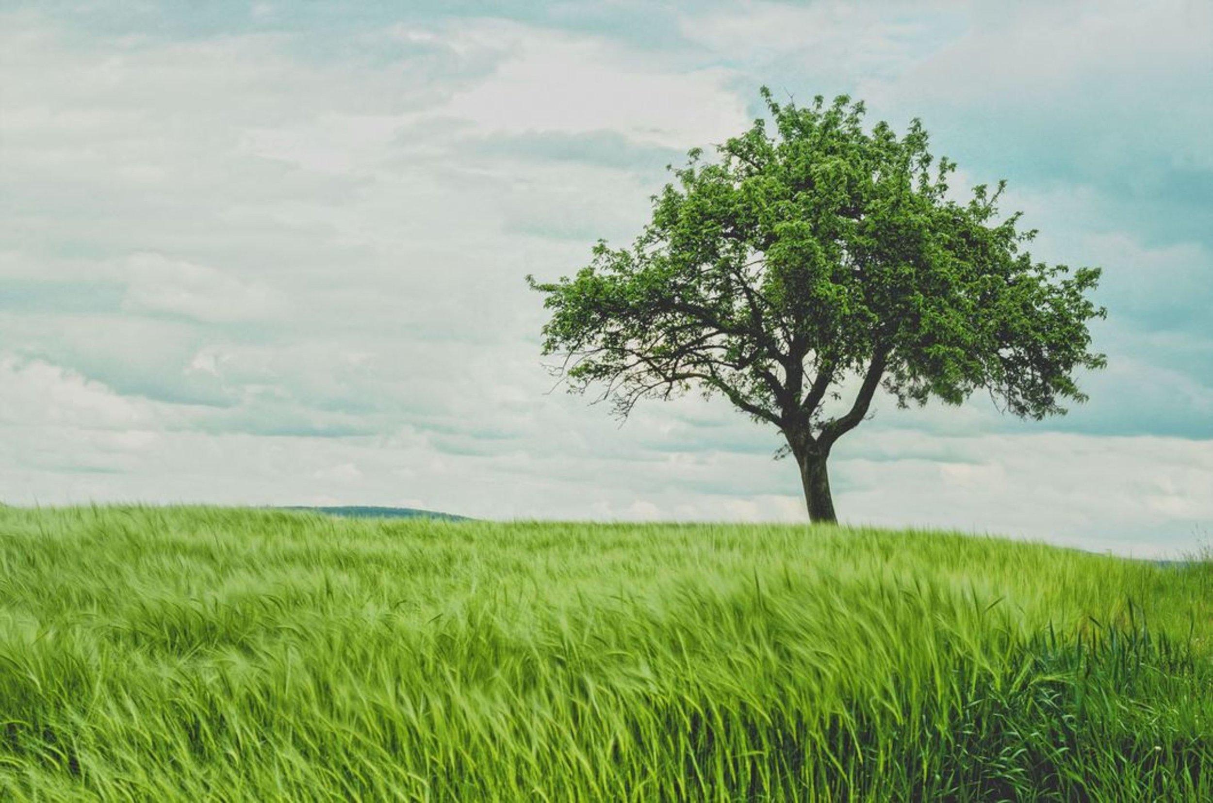 tree pics.jpg