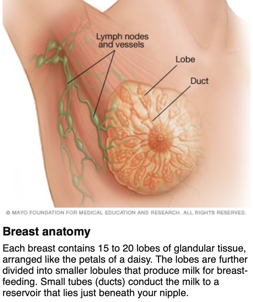 From: https://www.mayoclinic.org/diseases-conditions/breast-cancer/symptoms-causes/syc-20352470
