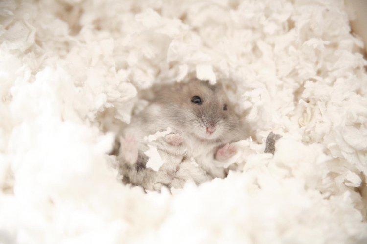 Safe Hamster Bedding Society, Can You Use Shredded Paper For Hamster Bedding
