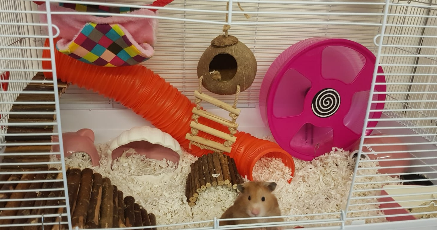 Hamster Cages Part I Hamster Society Singapore